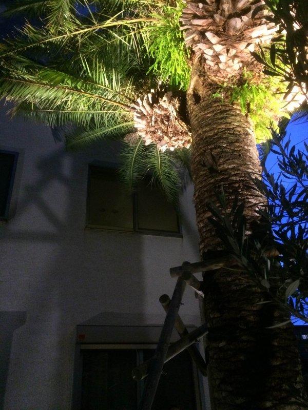 Lit-up 10m-high Palm Tree:GALLERY : Garden & Landscape ...